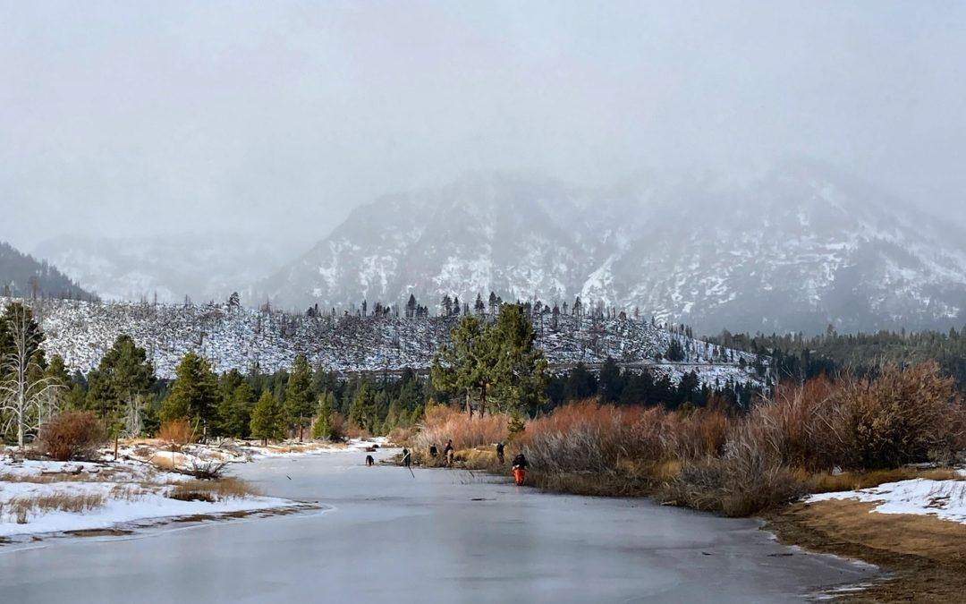 snowy day on taylor creek